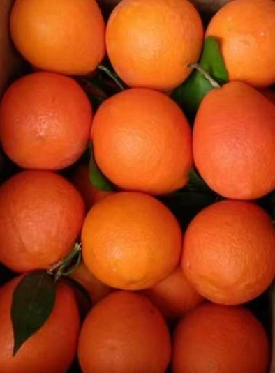雷波脐橙(9果装)